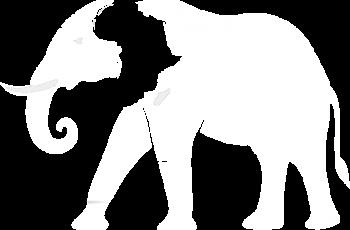 African Elephant by Iain McIntosh